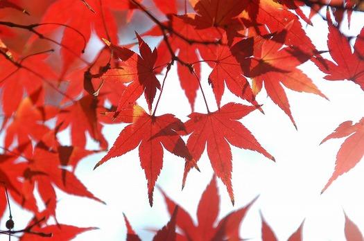 momiji_eha0112-049.jpg
