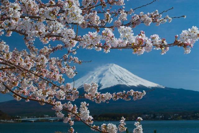 sakura_yam0060-049.jpg