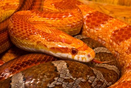 蛇・Fotolia_100395102_XS.jpg
