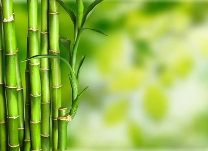 bamboo_Fotolia_101574502_XS.jpg
