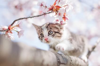 cat_Fotolia_97469761_XS.jpg