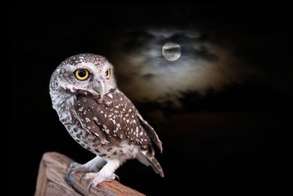 owl_Fotolia_71586661_XS.jpg